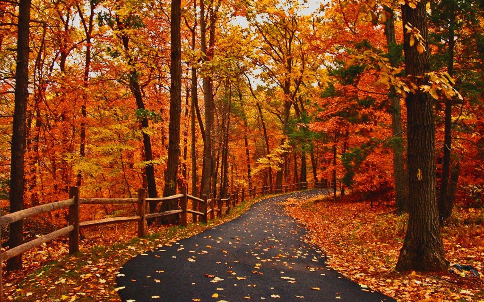 Autumn Walk through the Woods